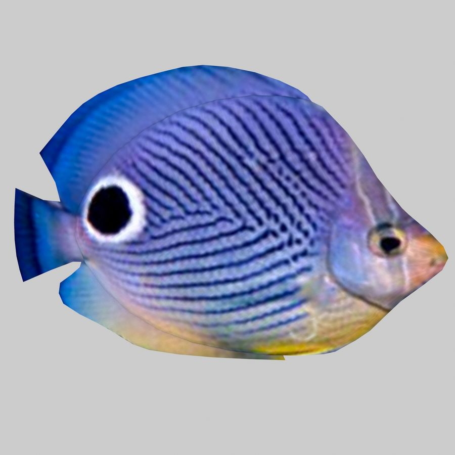 Aquarium Fish Collection Low Poly royalty-free 3d model - Preview no. 13