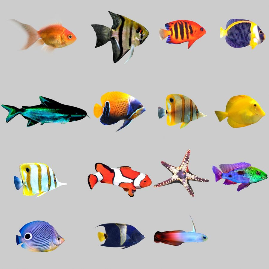 Aquarium Fish Collection Low Poly royalty-free 3d model - Preview no. 1