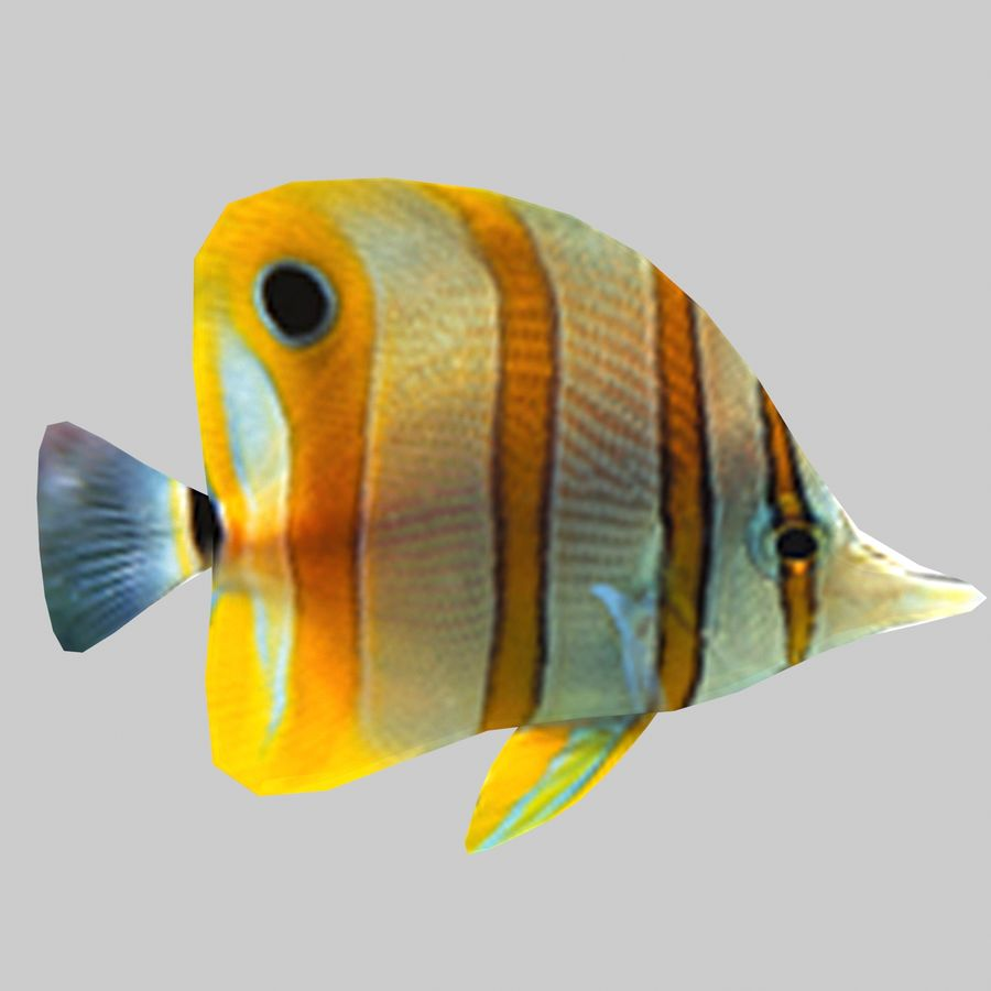 Aquarium Fish Collection Low Poly royalty-free 3d model - Preview no. 25