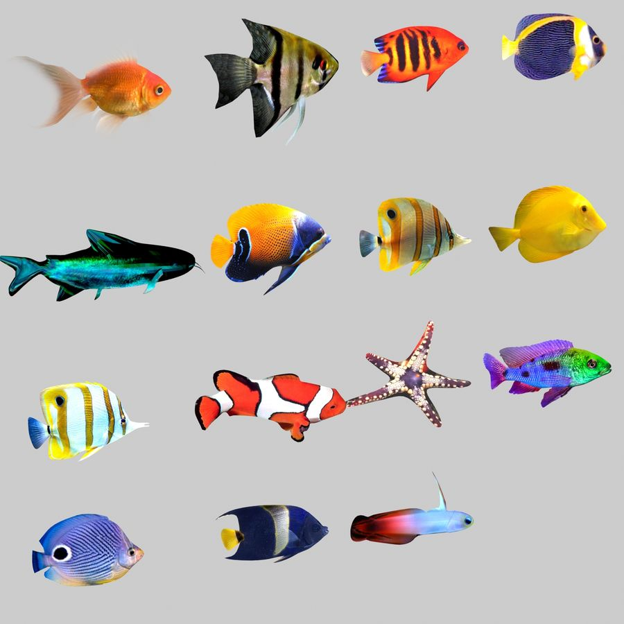 Aquarium Fish Collection Low Poly royalty-free 3d model - Preview no. 2