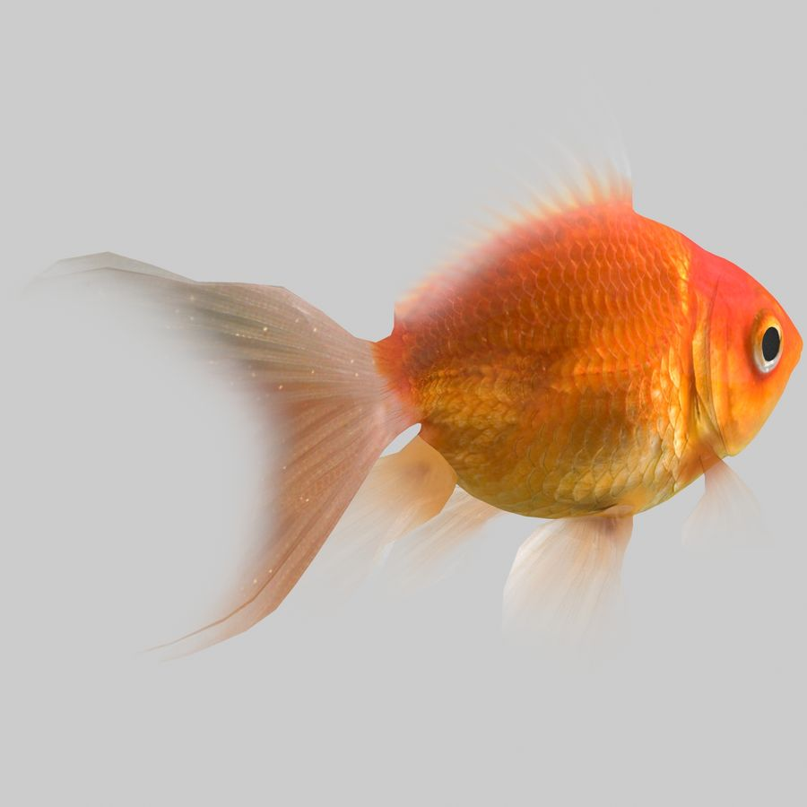 Aquarium Fish Collection Low Poly royalty-free 3d model - Preview no. 8