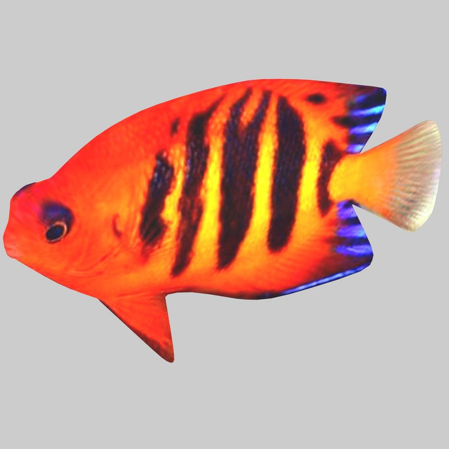 Aquarium Fish Collection Low Poly royalty-free 3d model - Preview no. 24