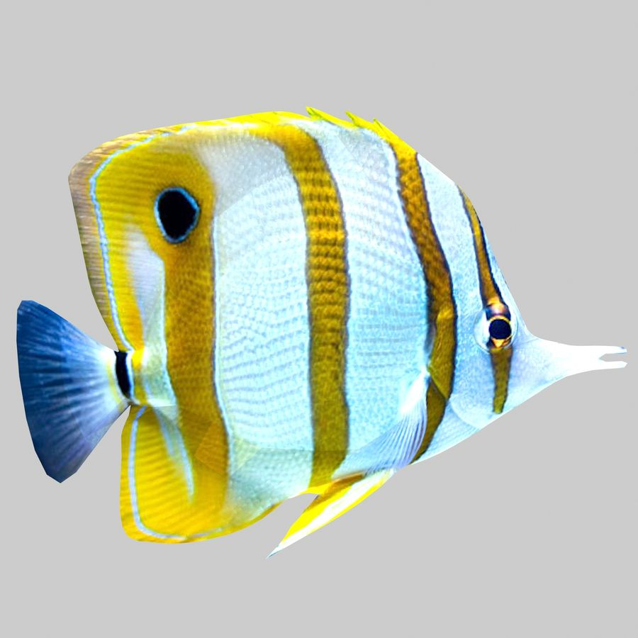 Aquarium Fish Collection Low Poly royalty-free 3d model - Preview no. 11