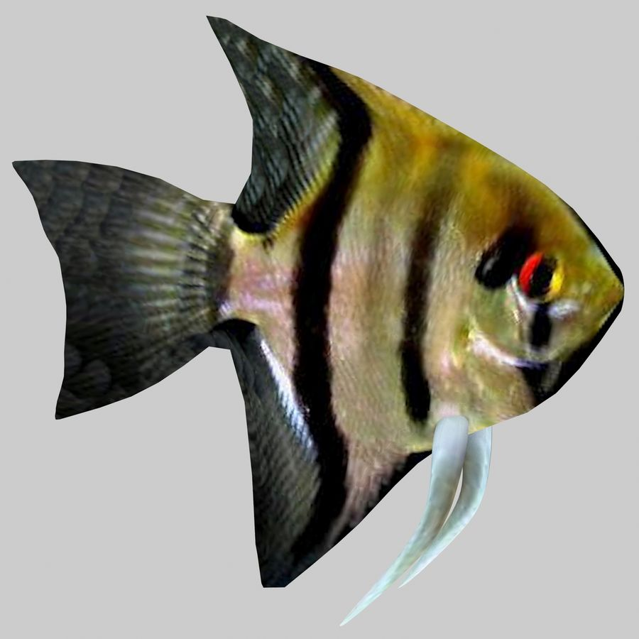 Aquarium Fish Collection Low Poly royalty-free 3d model - Preview no. 15