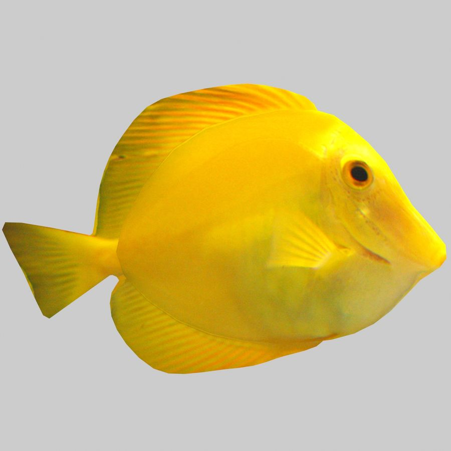 Aquarium Fish Collection Low Poly royalty-free 3d model - Preview no. 35