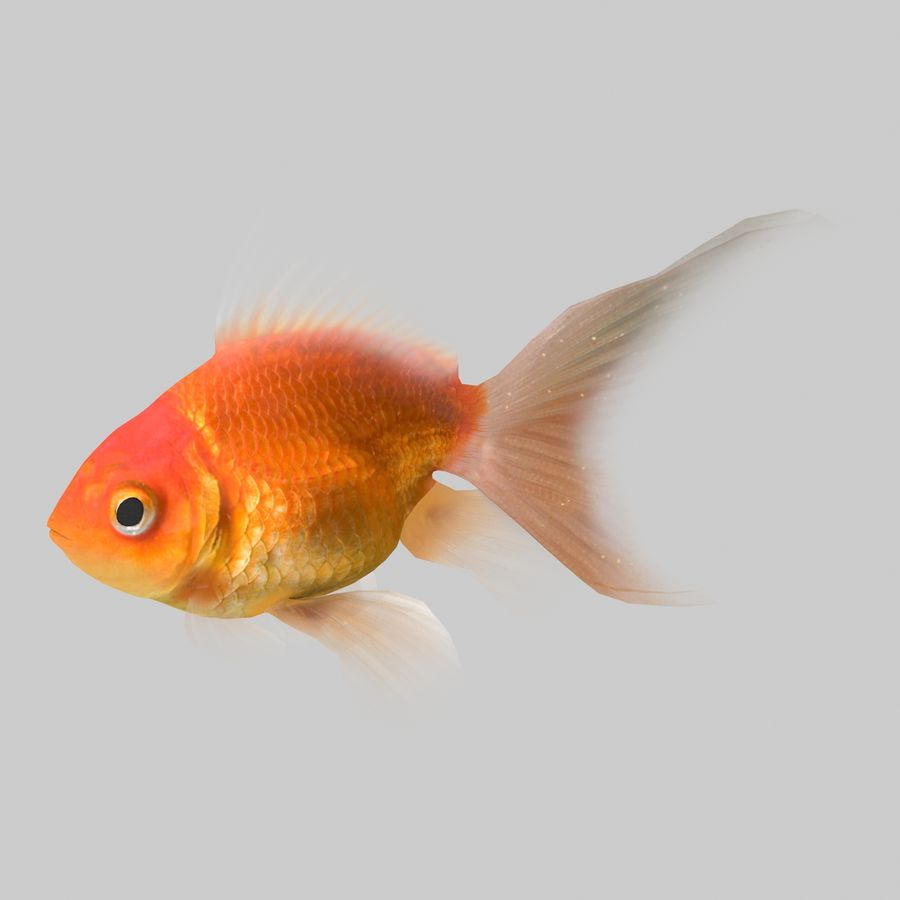 Aquarium Fish Collection Low Poly royalty-free 3d model - Preview no. 7