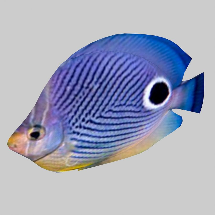 Aquarium Fish Collection Low Poly royalty-free 3d model - Preview no. 14