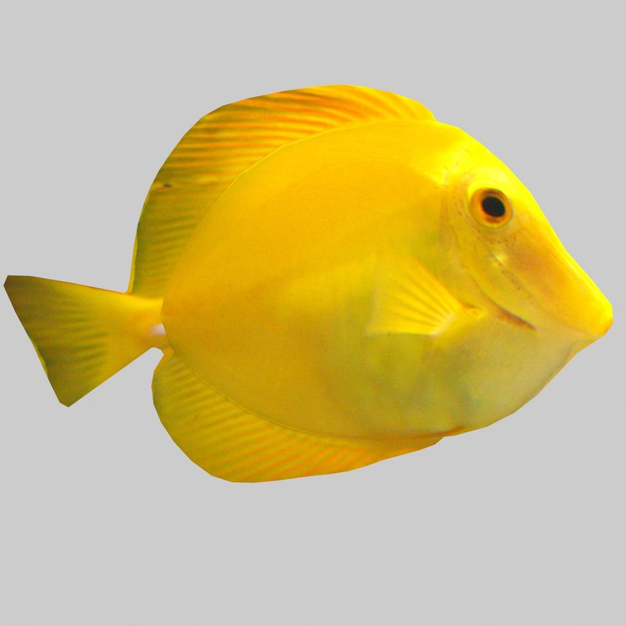 Aquarium Fish Collection Low Poly royalty-free 3d model - Preview no. 34