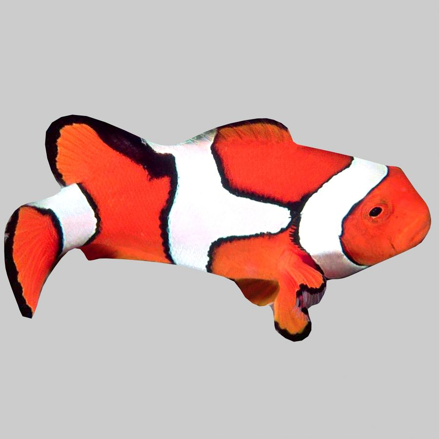 Aquarium Fish Collection Low Poly royalty-free 3d model - Preview no. 20
