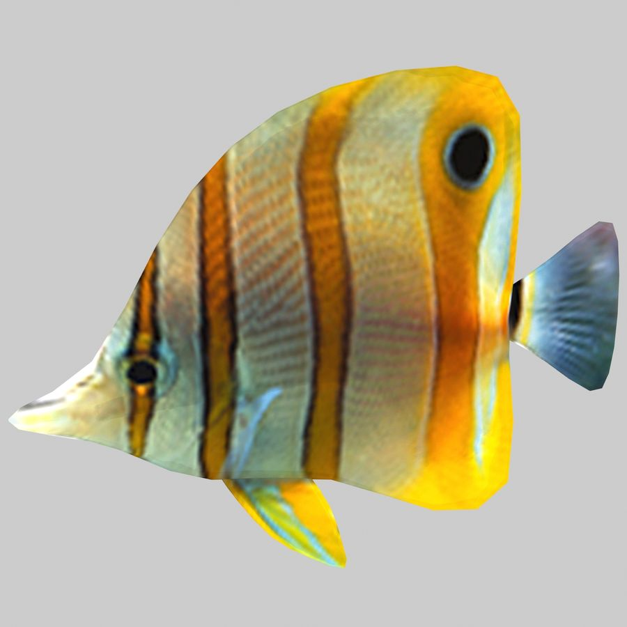 Aquarium Fish Collection Low Poly royalty-free 3d model - Preview no. 26