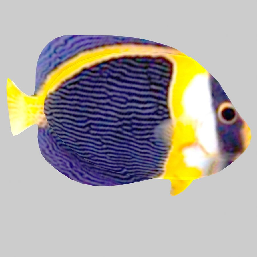 Aquarium Fish Collection Low Poly royalty-free 3d model - Preview no. 32