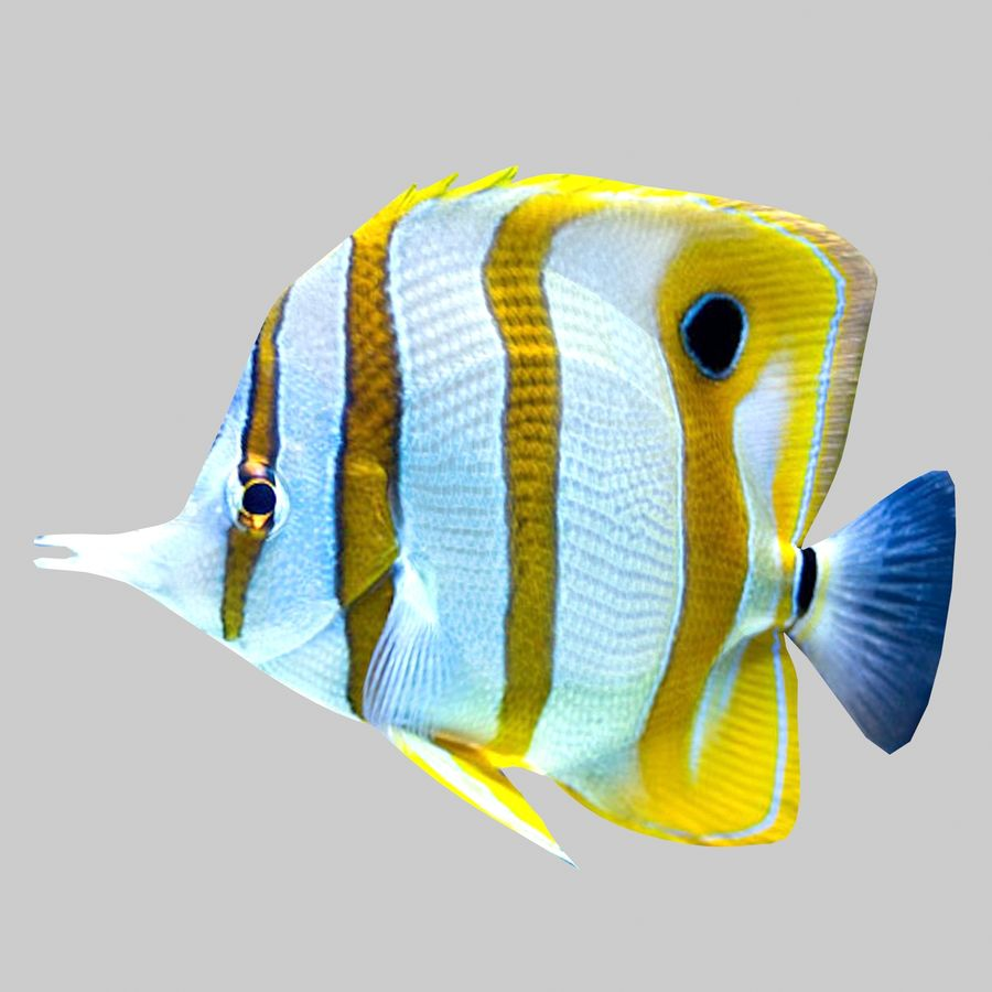 Aquarium Fish Collection Low Poly royalty-free 3d model - Preview no. 12