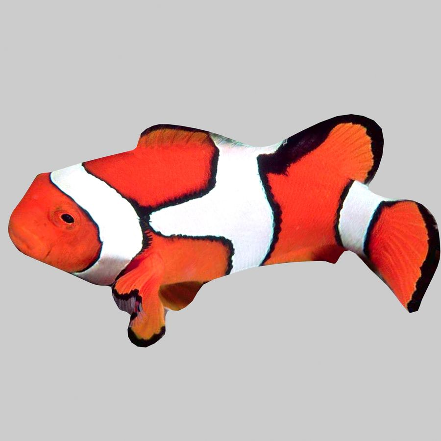 Aquarium Fish Collection Low Poly royalty-free 3d model - Preview no. 19