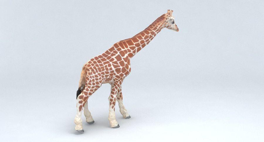 Giraffe royalty-free 3d model - Preview no. 7