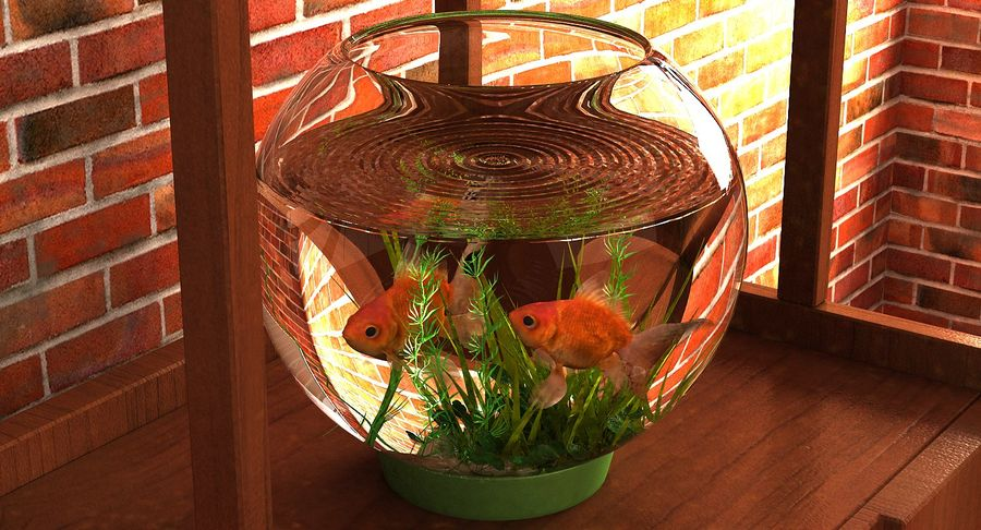 Gold Fish Aquarium Animated royalty-free 3d model - Preview no. 11