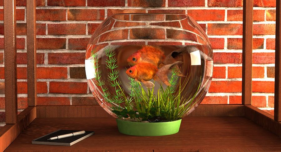 Gold Fish Aquarium Animated royalty-free 3d model - Preview no. 3