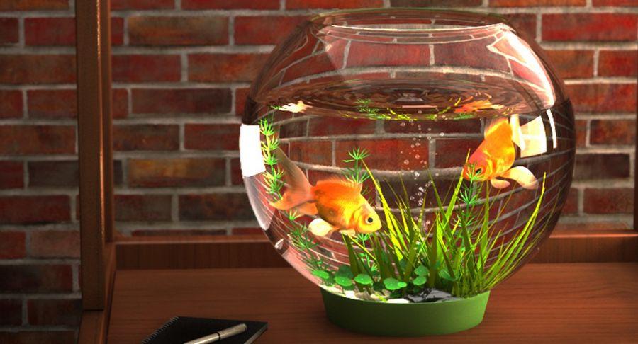 Gold Fish Aquarium Animated royalty-free 3d model - Preview no. 9