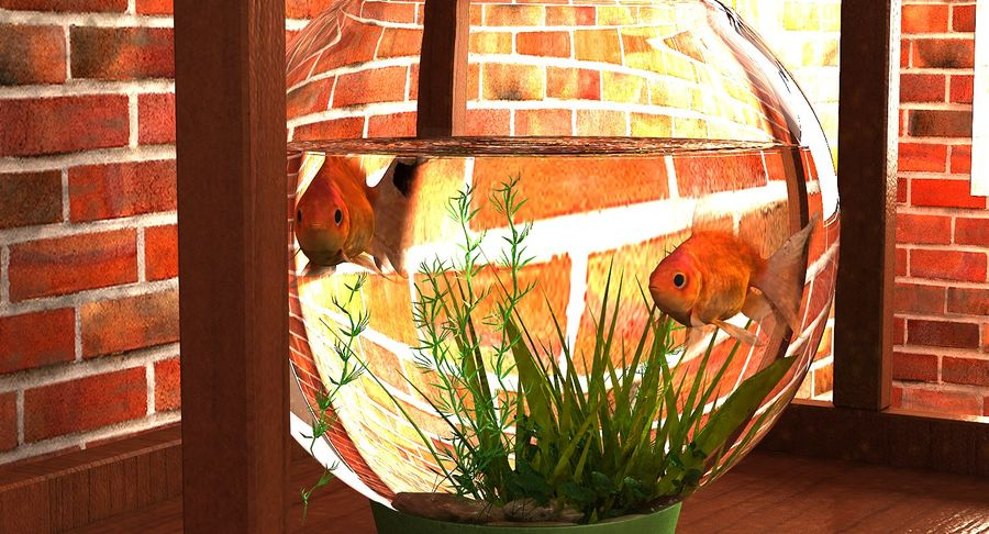 Gold Fish Aquarium Animated royalty-free 3d model - Preview no. 7