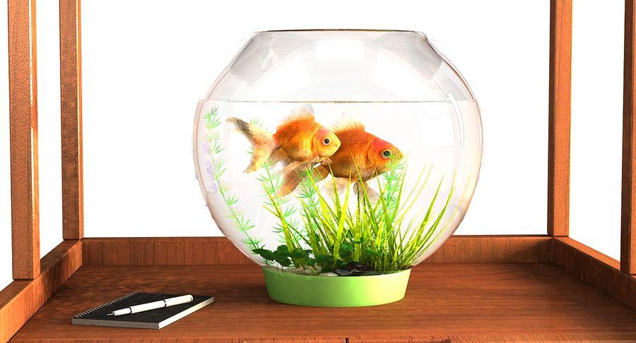 Gold Fish Aquarium Animated royalty-free 3d model - Preview no. 4
