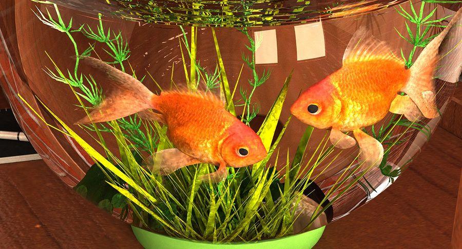 Gold Fish Aquarium Animated royalty-free 3d model - Preview no. 10