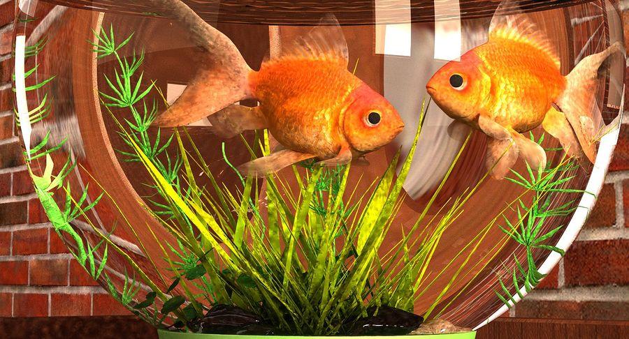 Gold Fish Aquarium Animated royalty-free 3d model - Preview no. 8