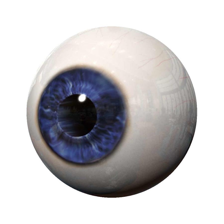 Реалистичный человеческий глаз royalty-free 3d model - Preview no. 1