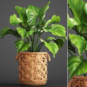 Tropische Pflanze im Topf 3d model