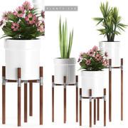 piante impostate 130 3d model