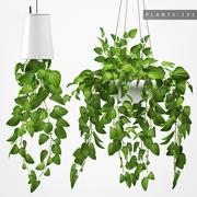 Hanging plant 131 3d model
