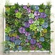 Vetplanten muur 3d model