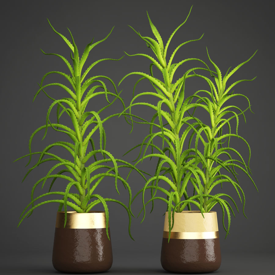 Aloe Vera Pflanze im Topf royalty-free 3d model - Preview no. 1