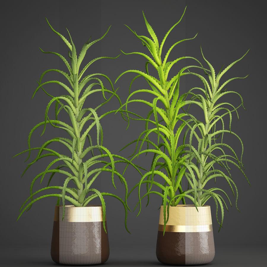 Aloe Vera Pflanze im Topf royalty-free 3d model - Preview no. 8