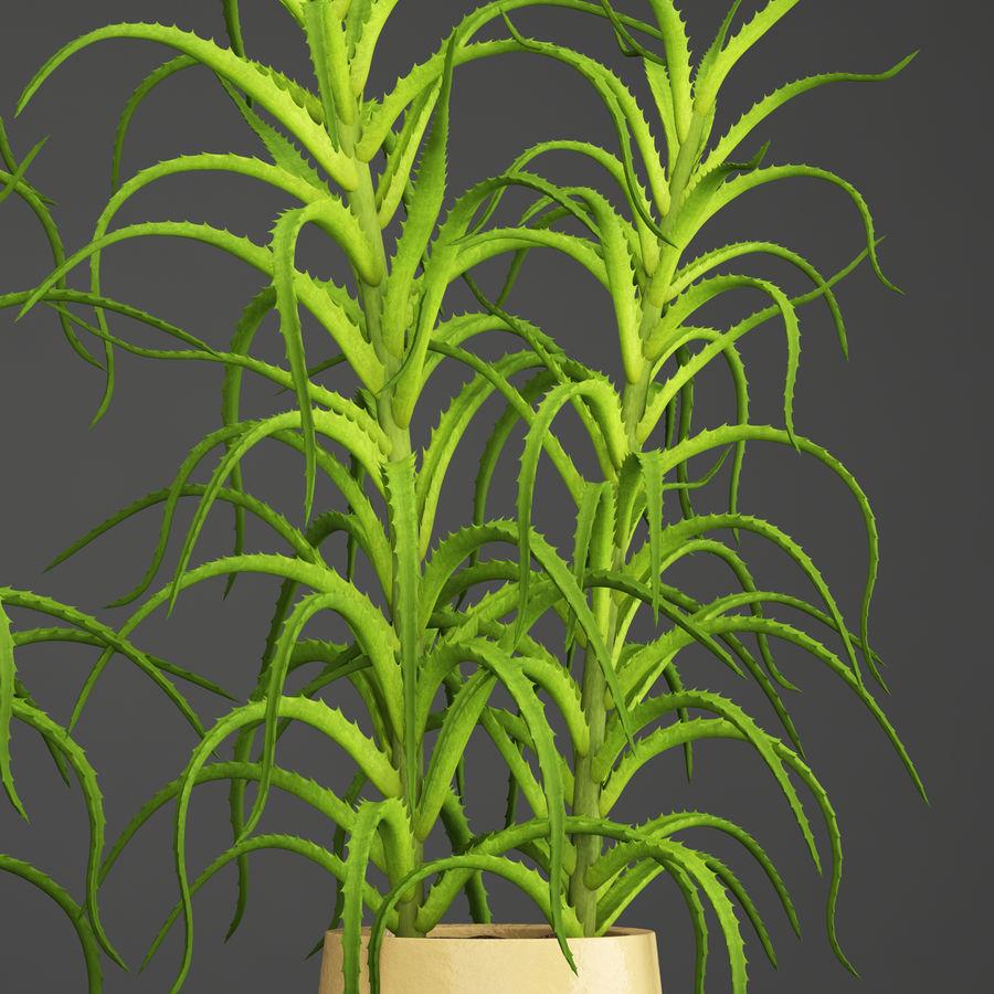 Aloe Vera Pflanze im Topf royalty-free 3d model - Preview no. 4
