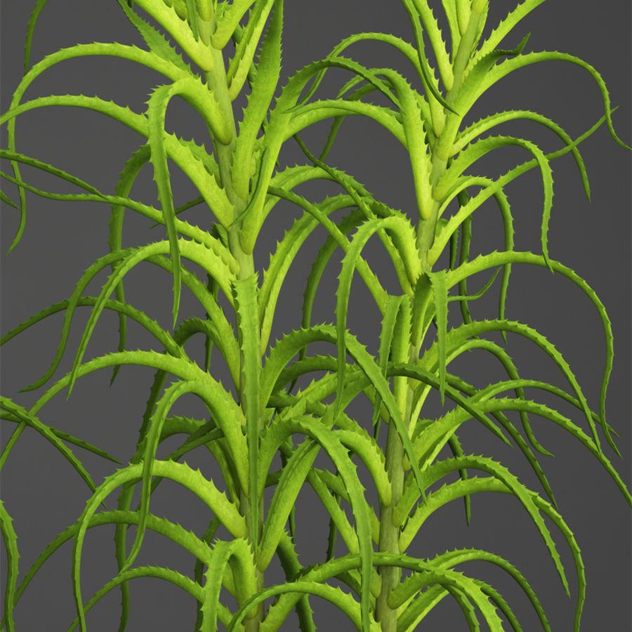 Aloe Vera Pflanze im Topf royalty-free 3d model - Preview no. 11