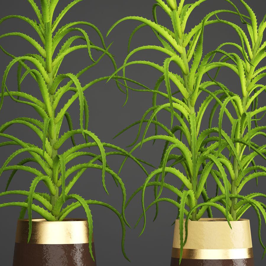 Aloe Vera Pflanze im Topf royalty-free 3d model - Preview no. 5