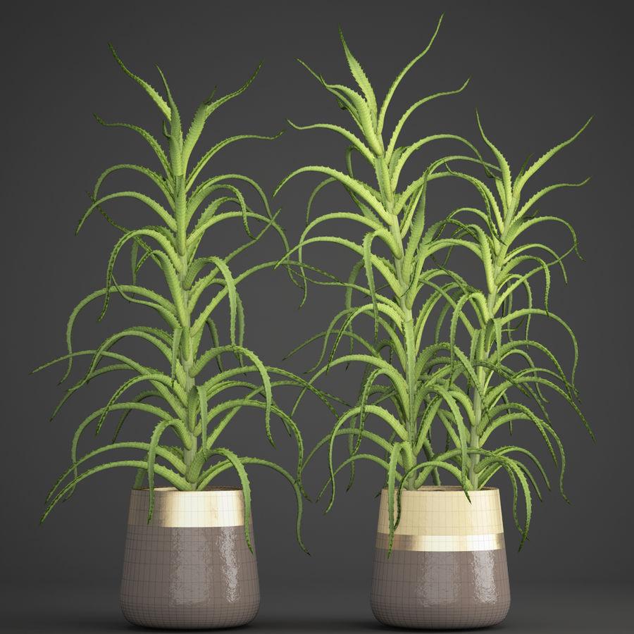 Aloe Vera Pflanze im Topf royalty-free 3d model - Preview no. 9