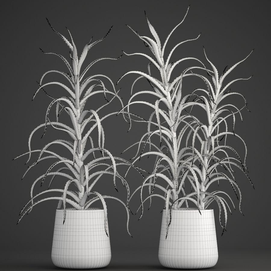 Aloe Vera Pflanze im Topf royalty-free 3d model - Preview no. 10