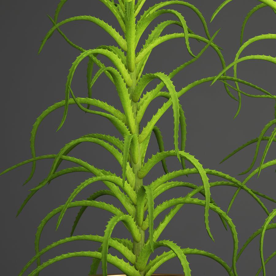 Aloe Vera Pflanze im Topf royalty-free 3d model - Preview no. 3
