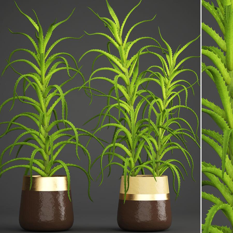 Aloe Vera Pflanze im Topf royalty-free 3d model - Preview no. 2
