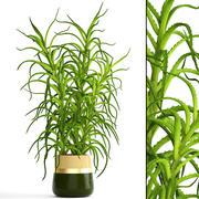 Aloe Vera Pflanze im Topf 3d model