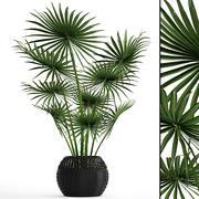 Cespuglio di palma 3d model