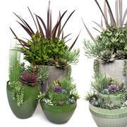 식물 3 3d model