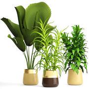Zestaw roślin 3d model