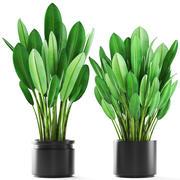 Кусты тропических растений 3d model