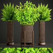 Paproć rośliny doniczkowe 3d model