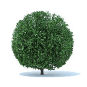 Arbuste sphérique 3d model