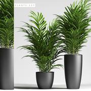 palmiye bitkileri 137 3d model