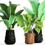 收集植物 3d model