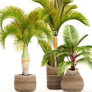 Sammlung tropischer Pflanzen 3d model