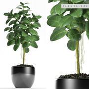Rubber plant 122 3d model
